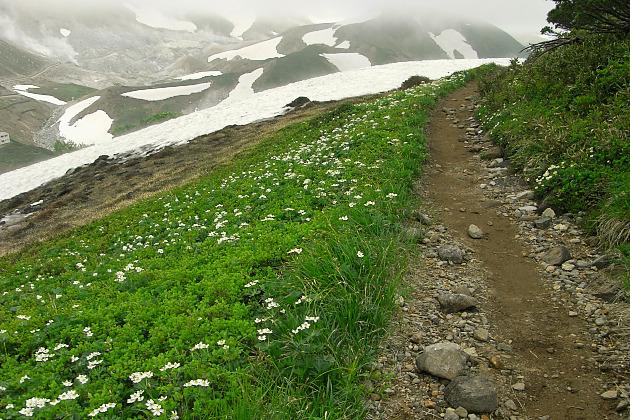 稜線の花畑